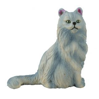 Pisica Persana-sezand S Collecta